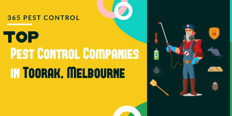 Top 10 Pest Control Companies in Toorak