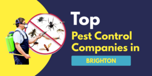 Top 10 Pest Control Companies in Brighton