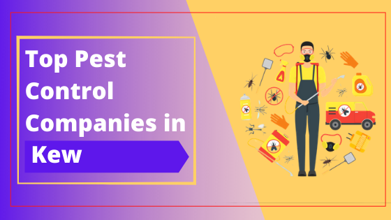 Top 10 Pest Control Companies in Kew