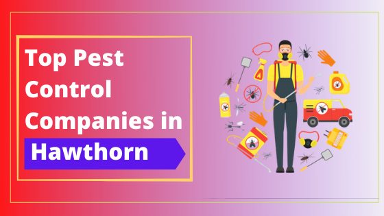 Top 10 Pest Control Companies in Hawthorn