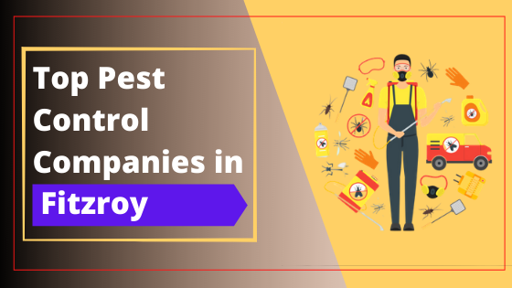 Top 10 Pest Control Companies in Fitzroy