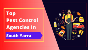 Top 10 Pest Control Companies in South Yarra